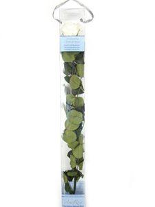 1 Haltbare stabilisierte Rose in champagne, konservierte Rosen die ihre lebendige Natürlichkeit über eine Ewigkeit behalten.