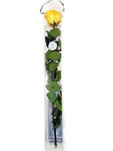 1 Haltbare stabilisierte Rose in gelb, konservierte Rosen die ihre lebendige Natürlichkeit über eine Ewigkeit behalten.