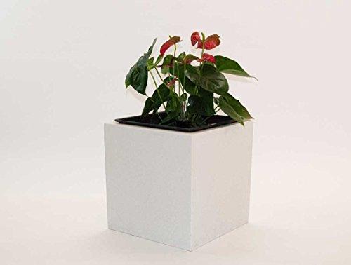 Pflanzkübel Blumenkübel Blumentopf Fiberglas Quadrat LxBxH 30x30x30cm perlmutt weiß.