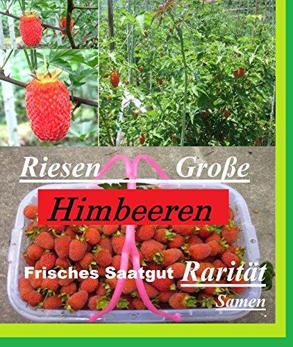25x Riesen Himbeeren Samen Saatgut Pflanze Rarität essbar Obst Selten essbar Neuheit #131